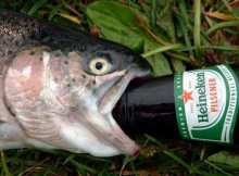 a fish drinking a beer